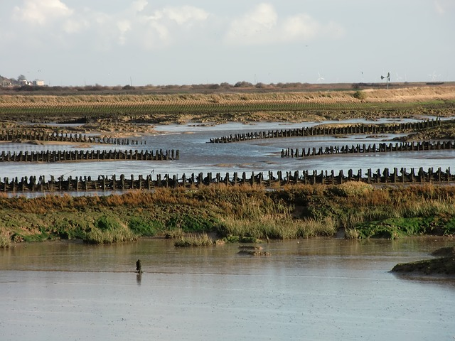 saltmarsh essex sea defenses